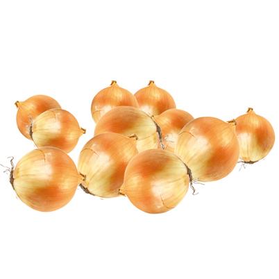Sveriami svogūnų sodinukai (dyd. 8-24 mm), 1 kg